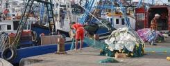 tn_moroccan_fishermen_unloading_driftnets_510.jpg